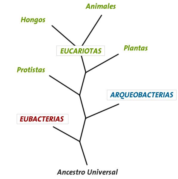 Imagen:Arbol vida.JPG - Wikillerato